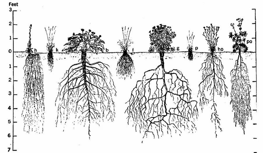 backyard gardener - understanding plant roots