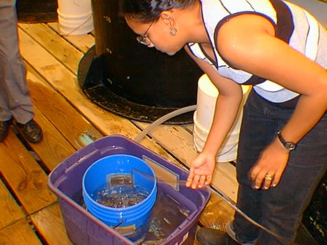 Arizona Shrimp Farms