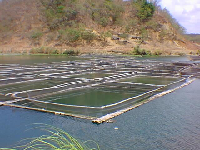 aquaculture in the philippines The philippine aquaculture industry arsenio s camacho aquaculture department southeast asian fisheries development center tigbauan, iloilo, philippines.
